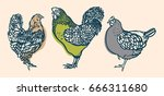 rooster and chicken. poultry.... | Shutterstock .eps vector #666311680