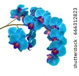 orchids on isolated background. ... | Shutterstock . vector #666312823