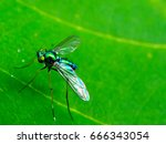 close up long legged fly stand... | Shutterstock . vector #666343054
