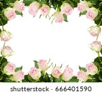 beautiful white rose flowers... | Shutterstock . vector #666401590