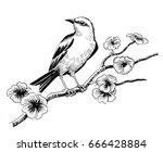 bird on the blossoming tree | Shutterstock . vector #666428884