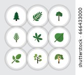flat icon nature set of hickory ... | Shutterstock .eps vector #666433000