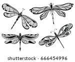 Stock vector dragonflies 666454996