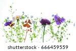 summer flowers | Shutterstock . vector #666459559