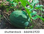 the fruit is called watermelon. ... | Shutterstock . vector #666461920