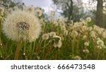 dandelion and nature | Shutterstock . vector #666473548