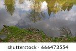 ducks and nature. | Shutterstock . vector #666473554