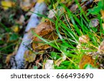 Small photo of mushrooms in autumn forest: boletus, Abaca close-up