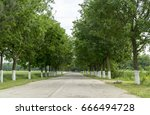 country road. tree lined... | Shutterstock . vector #666494728