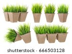 seedlings isolated. cardboard... | Shutterstock . vector #666503128