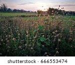 foreground  grass flower near...   Shutterstock . vector #666553474