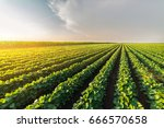 agricultural soy plantation on ... | Shutterstock . vector #666570658
