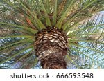 palm tree | Shutterstock . vector #666593548