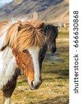 icelandic horse in free nature | Shutterstock . vector #666630868
