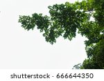 green leaves and branches on... | Shutterstock . vector #666644350