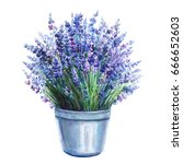 lavender in bucket isolated on... | Shutterstock . vector #666652603