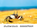 Crab On Sandy Beach