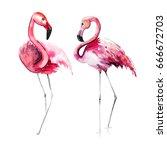 bright lovely tender gentle... | Shutterstock . vector #666672703