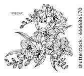 bouquet of freesia flowers... | Shutterstock .eps vector #666686170