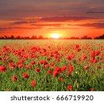 poppy meadow on sunset...   Shutterstock . vector #666719920
