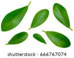 green leaves pattern on white... | Shutterstock . vector #666767074