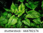 close up tropical nature green... | Shutterstock . vector #666782176