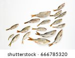 flat lay of a school of fish ... | Shutterstock . vector #666785320