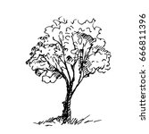 hand drawn tree isolated on...