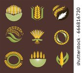 cereal ears and grains... | Shutterstock .eps vector #666816730