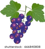 sweet black currants with leaves | Shutterstock .eps vector #666840808
