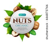 vector frame of realistic nuts... | Shutterstock .eps vector #666873766