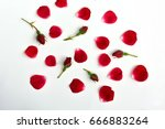 Stock photo red roses with petals on white background top view 666883264