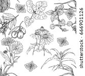 seamless pattern with plants... | Shutterstock .eps vector #666901126