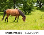 Shiny Light Bay Arabian Horse...