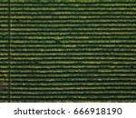 aerial view of cultivated... | Shutterstock . vector #666918190