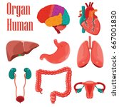 human organs colorful  icon set.... | Shutterstock .eps vector #667001830