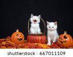 Stock photo white kittens one in basket looks like laughing hysterically one sitting next to basket looking 667011109