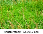 weeds waving in the wind | Shutterstock . vector #667019128
