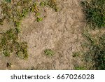 patchy grass texture | Shutterstock . vector #667026028
