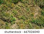 patchy grass texture | Shutterstock . vector #667026040