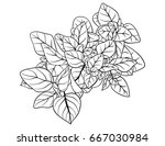 adult coloring page book a... | Shutterstock .eps vector #667030984