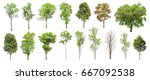 isolated trees on white...   Shutterstock . vector #667092538