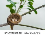 bird nest  | Shutterstock . vector #667102798