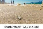 Tiny Jellyfish On The Beach  ...