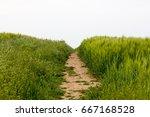 footpath worn across crop field ...   Shutterstock . vector #667168528