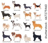 Colored Purebred Dogs Icon Set...