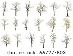 perennial trees died on white... | Shutterstock . vector #667277803