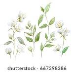 watercolor set of jasmine...   Shutterstock . vector #667298386