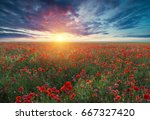 beautiful field of red poppies... | Shutterstock . vector #667327420