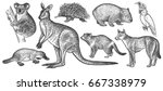 animals of australia set. koala ... | Shutterstock .eps vector #667338979